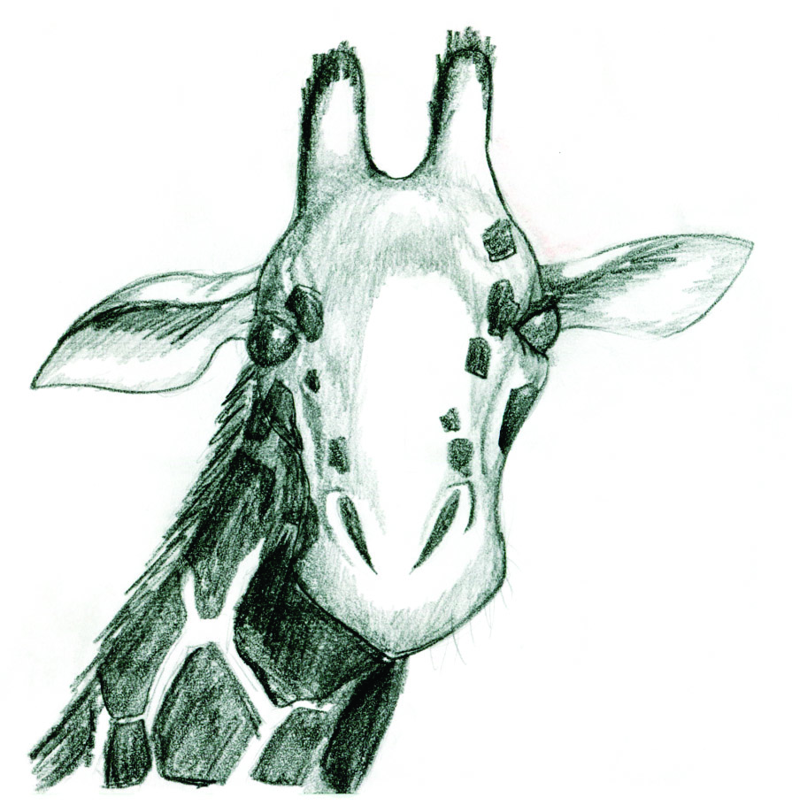 Giraffe Pictures For Kids Kids Art Giraffes Jonathan