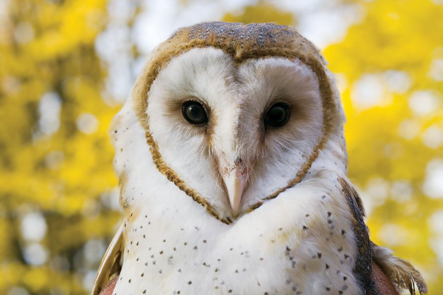 Barn Owls at the Pittsburgh Zoo | The Wild World of Zoobooks