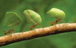 ZT Ants IFC_01