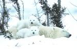 ZT Animal Babies IFC_01