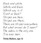 Zebras_poem_Trinity