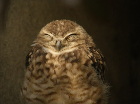 Burrowing_owl_smile.jpg