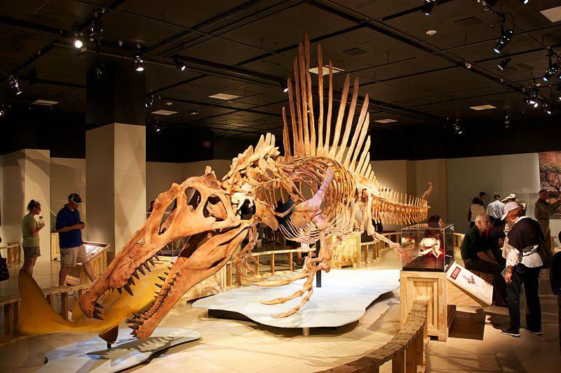spinosaurus_swimming