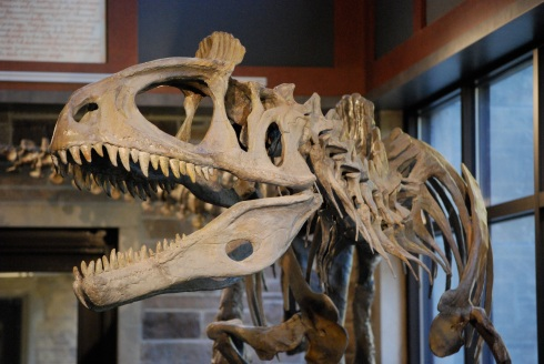 Augustana_College_Cryolophosaurus.JPG