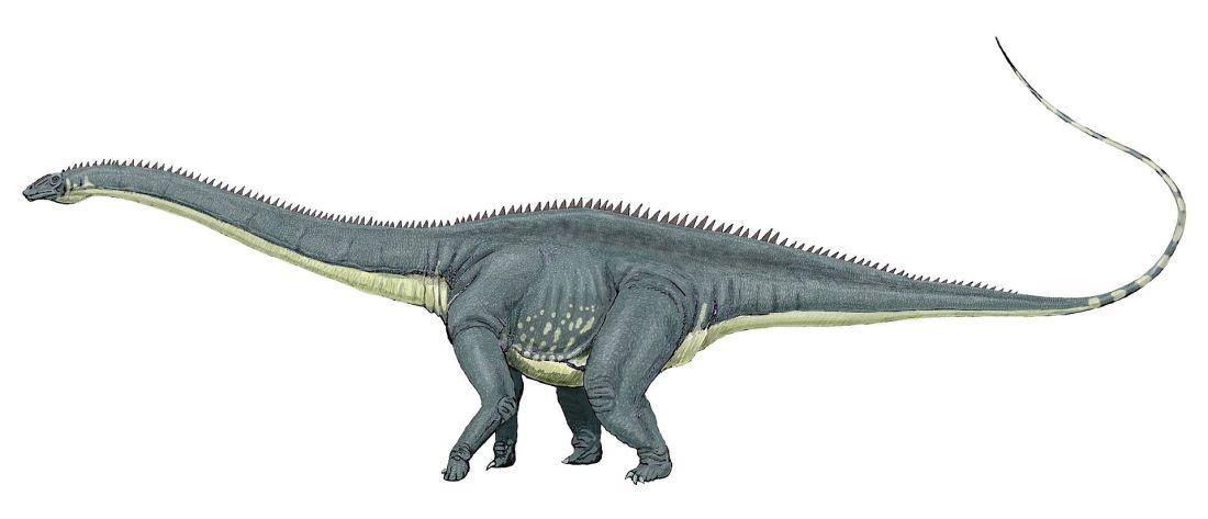 Diplodocus_carng1DB
